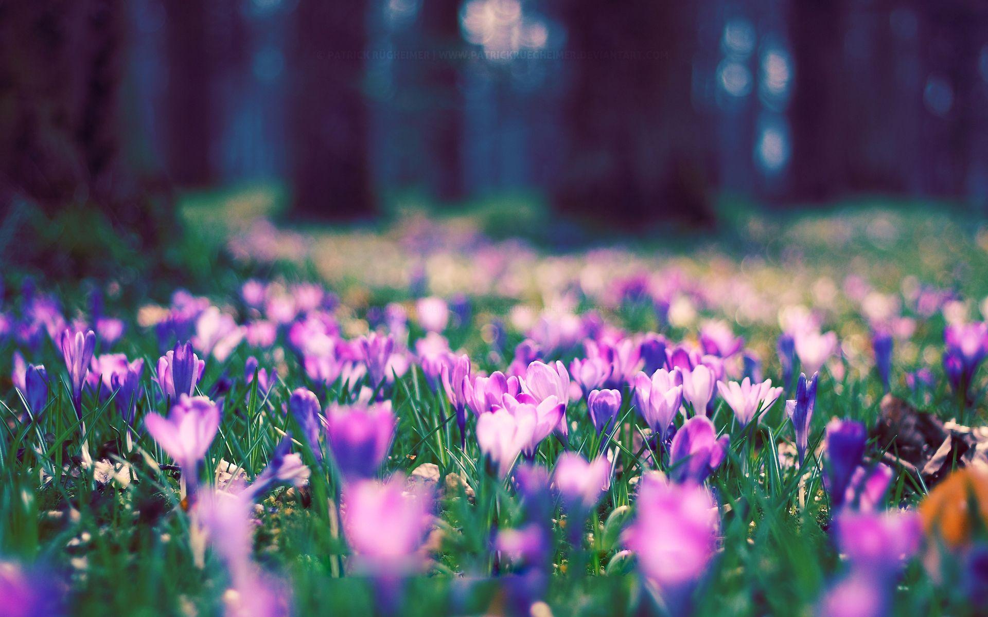 Flower Desktop Wallpapers Top Free Flower Desktop Backgrounds
