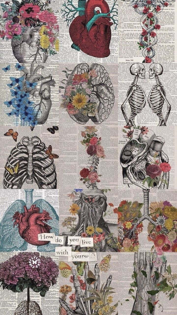 Anatomy Iphone Wallpapers Top Free Anatomy Iphone Backgrounds Wallpaperaccess