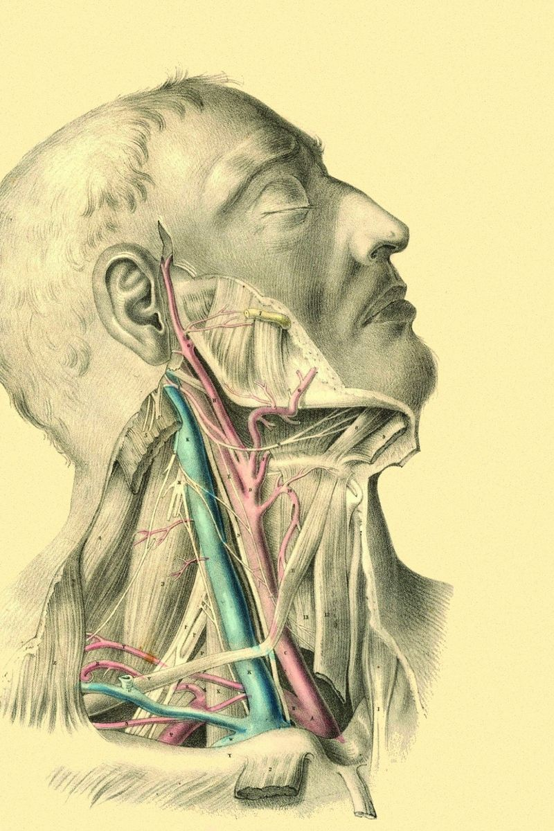Anatomy iPhone Wallpapers - Top Free Anatomy iPhone ...