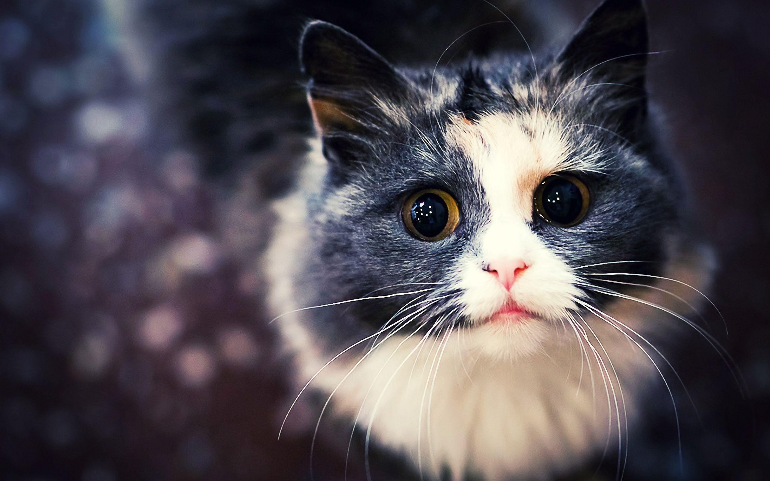 Tumblr Cute Cat Desktop Wallpapers Top Free Tumblr Cute Cat Desktop Backgrounds Wallpaperaccess