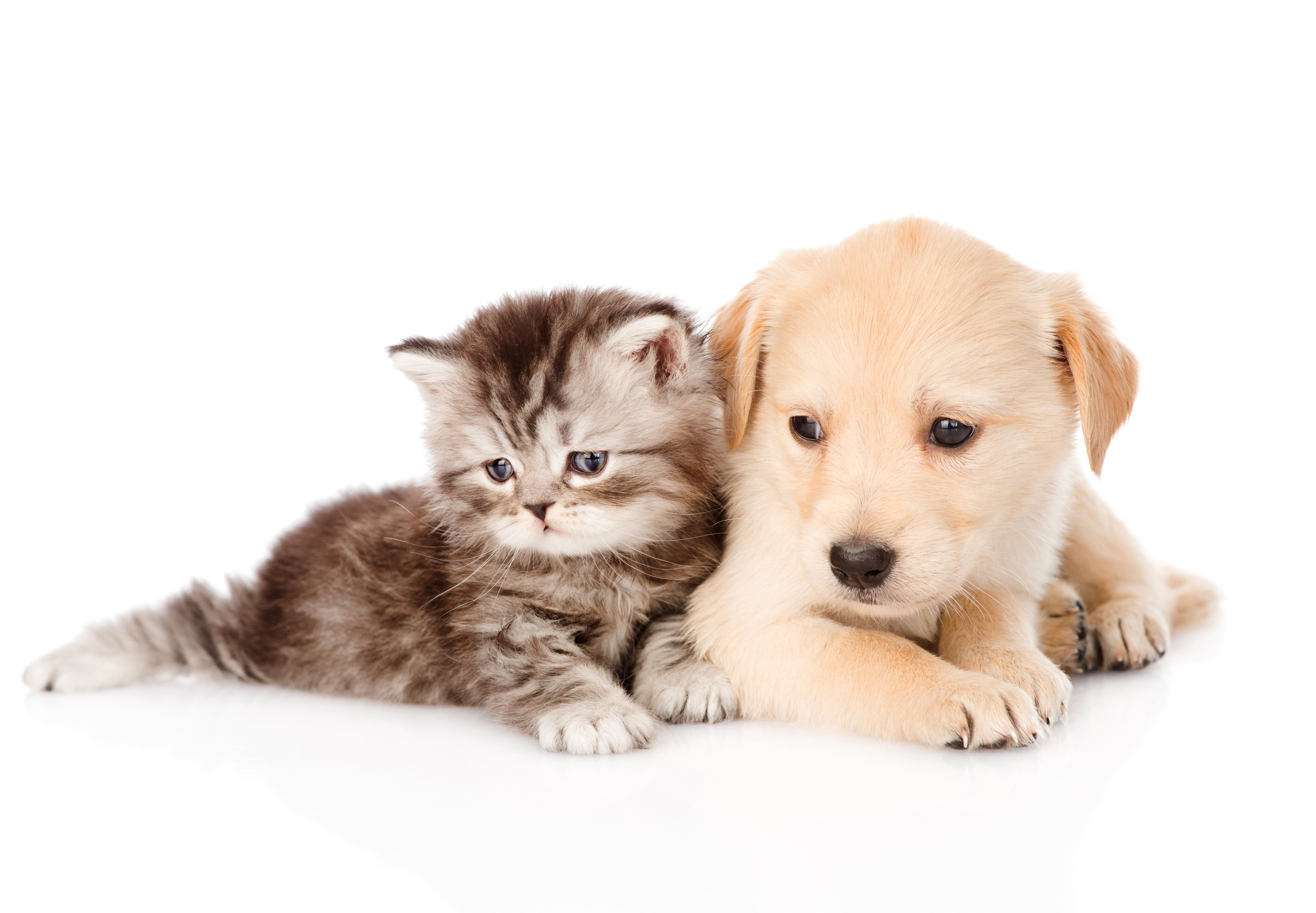 Cat And Dog Desktop Wallpapers Top Free Cat And Dog Desktop Backgrounds Wallpaperaccess