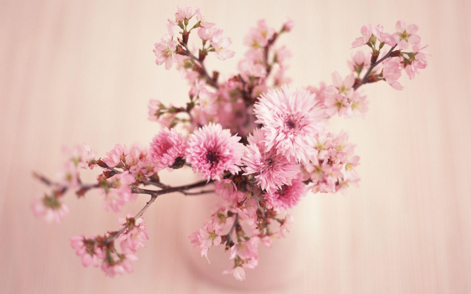 Beautiful Vintage Flower Wallpapers Top Free Beautiful Vintage Flower Backgrounds Wallpaperaccess