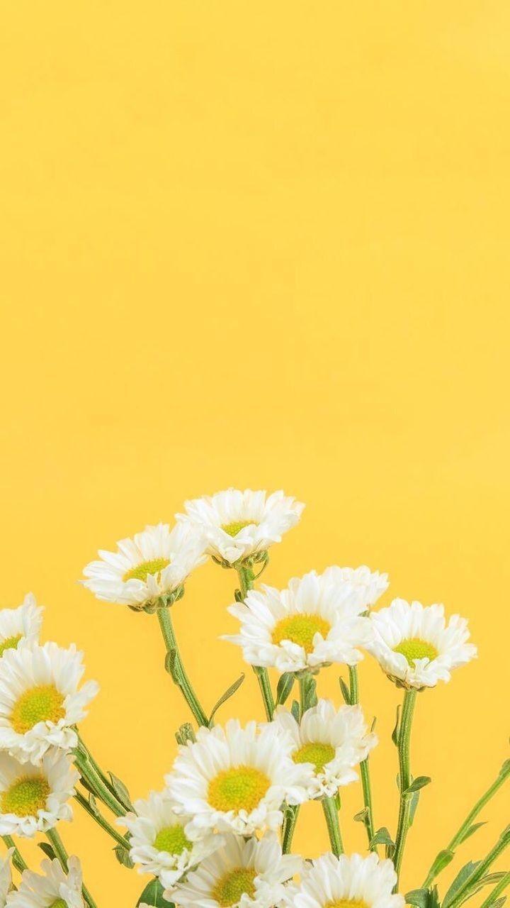 Yellow Aesthetic Wallpapers Top Free Yellow Aesthetic Backgrounds