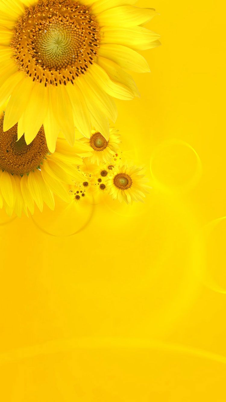Yellow Hd Iphone Wallpapers Top Free Yellow Hd Iphone Backgrounds Wallpaperaccess