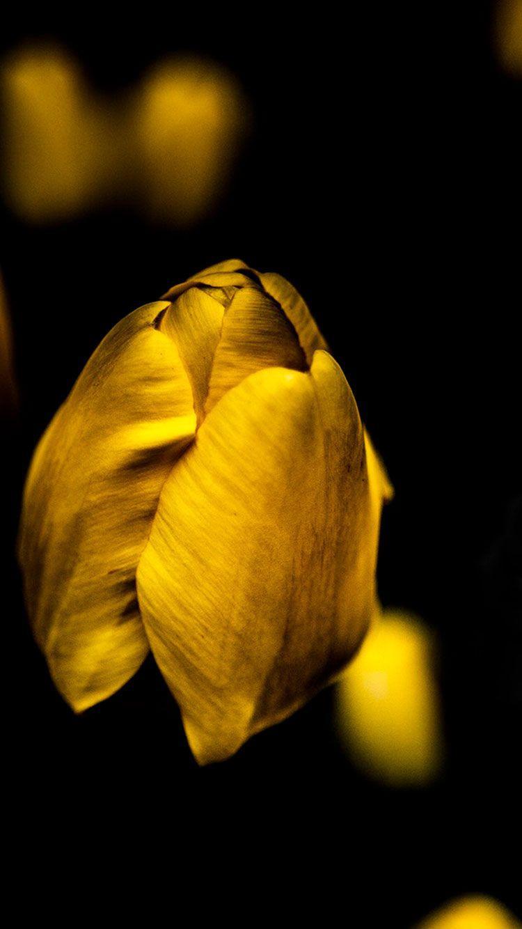 750x1334 HD Yellow Hình Nền iPhone