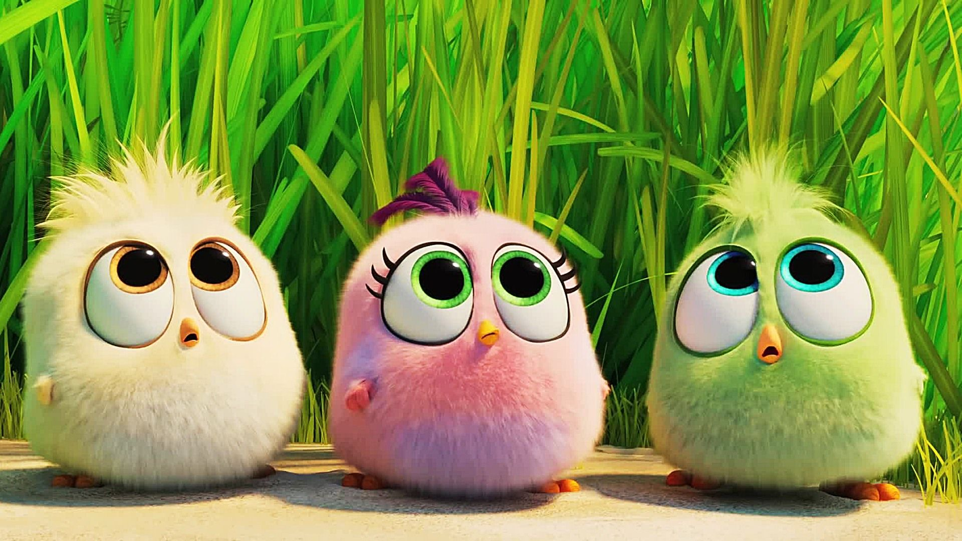 The Angry Birds Movie 2 Wallpapers Top Free The Angry