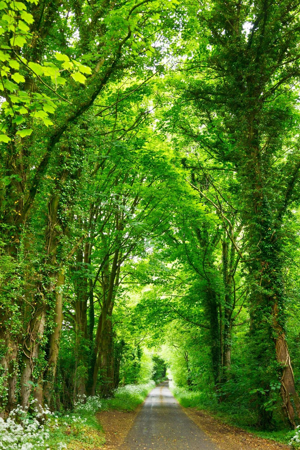 Green Tree Wallpapers - Top Free Green ...