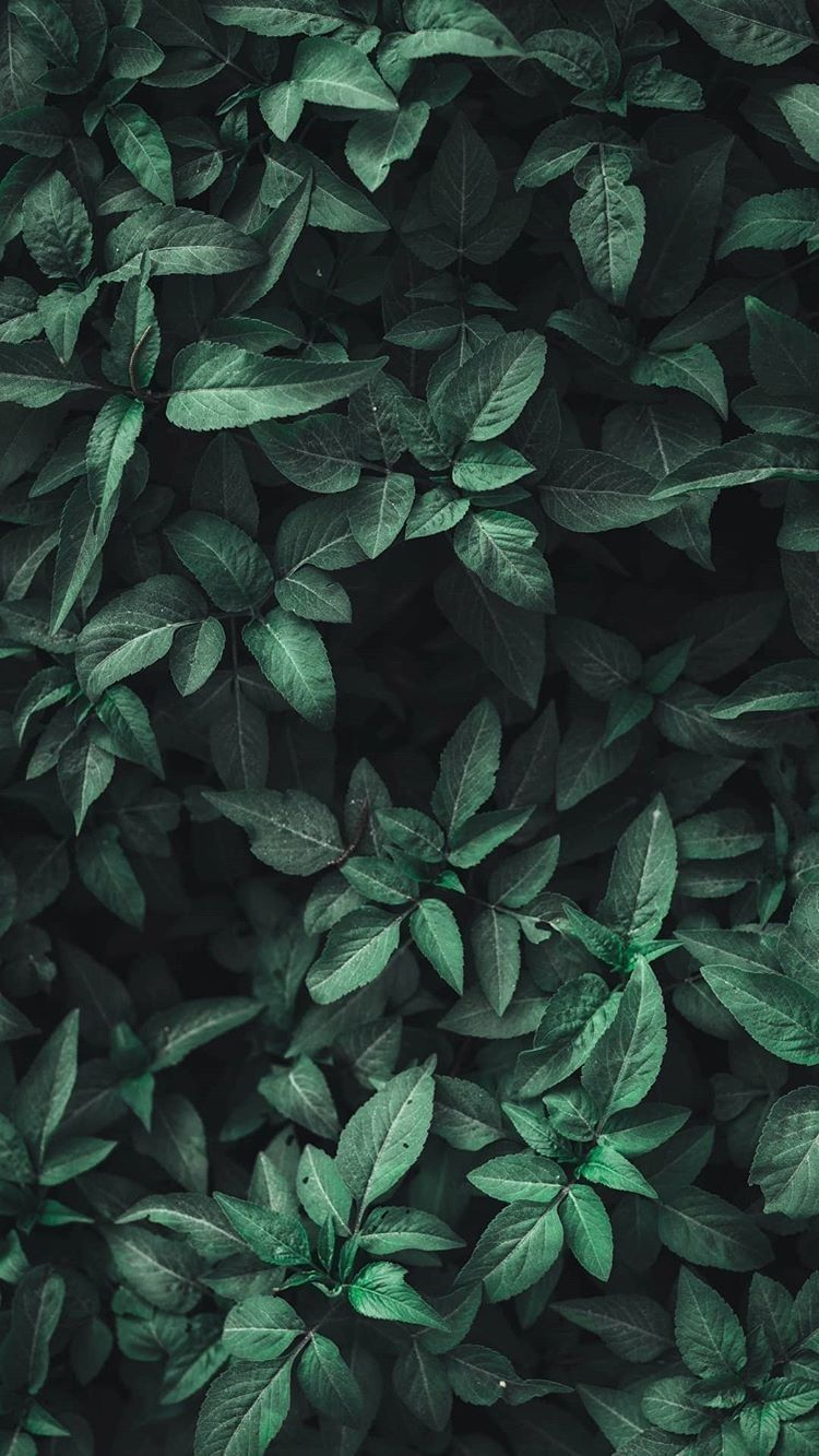 Dark Green Aesthetic Wallpapers Top Free Dark Green