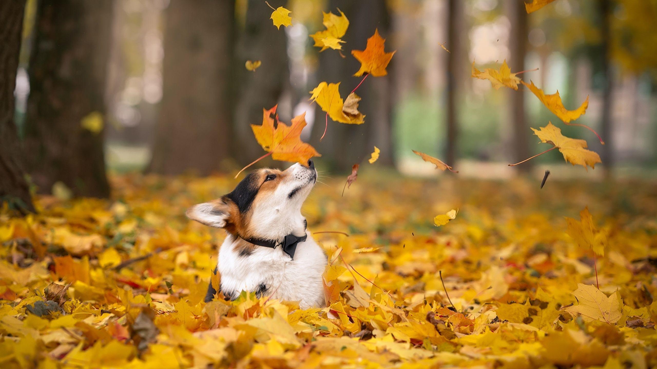 Autumn Pets Desktop Wallpapers Top Free Autumn Pets Desktop Backgrounds Wallpaperaccess