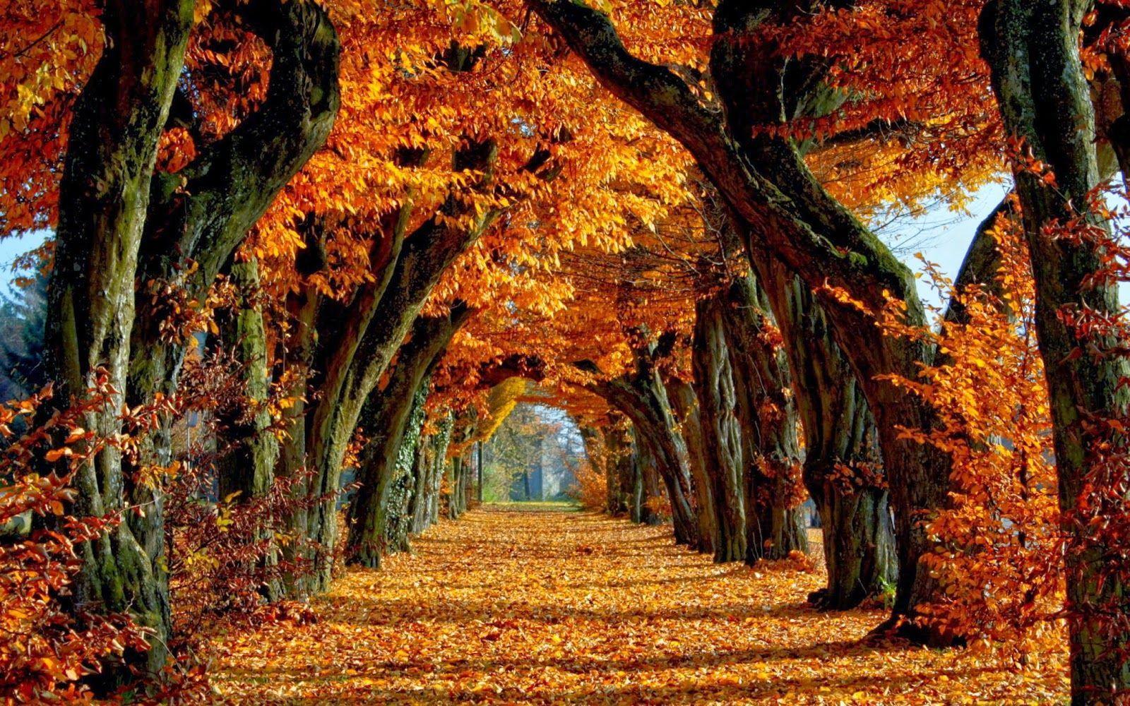 Fall Autumn Desktop Wallpapers Top Free Fall Autumn Desktop Backgrounds Wallpaperaccess