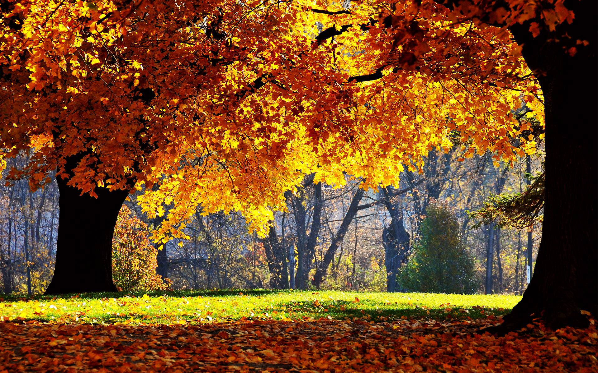 Fall Autumn Desktop Wallpapers Top Free Fall Autumn