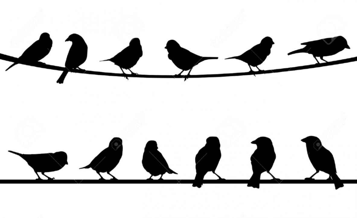 Hipster Birds Wallpapers Top Free Hipster Birds Backgrounds