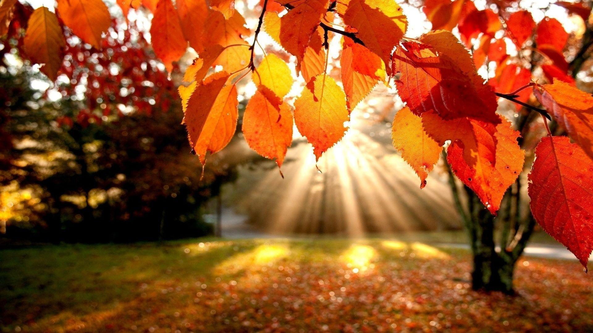 Hd Fall Desktop Wallpapers Top Free Hd Fall Desktop