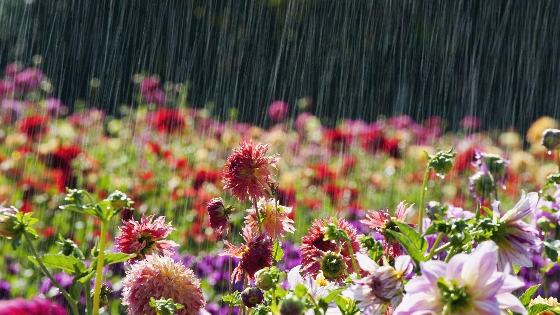 Most Beautiful Rain Wallpapers Top Free Most Beautiful