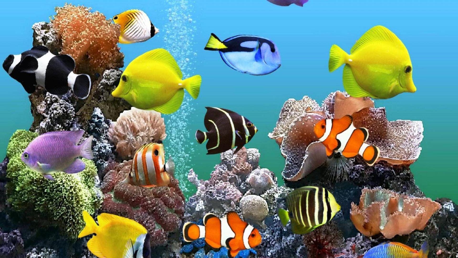 Aquarium Desktop Wallpapers Top Free Aquarium Desktop Backgrounds Wallpaperaccess