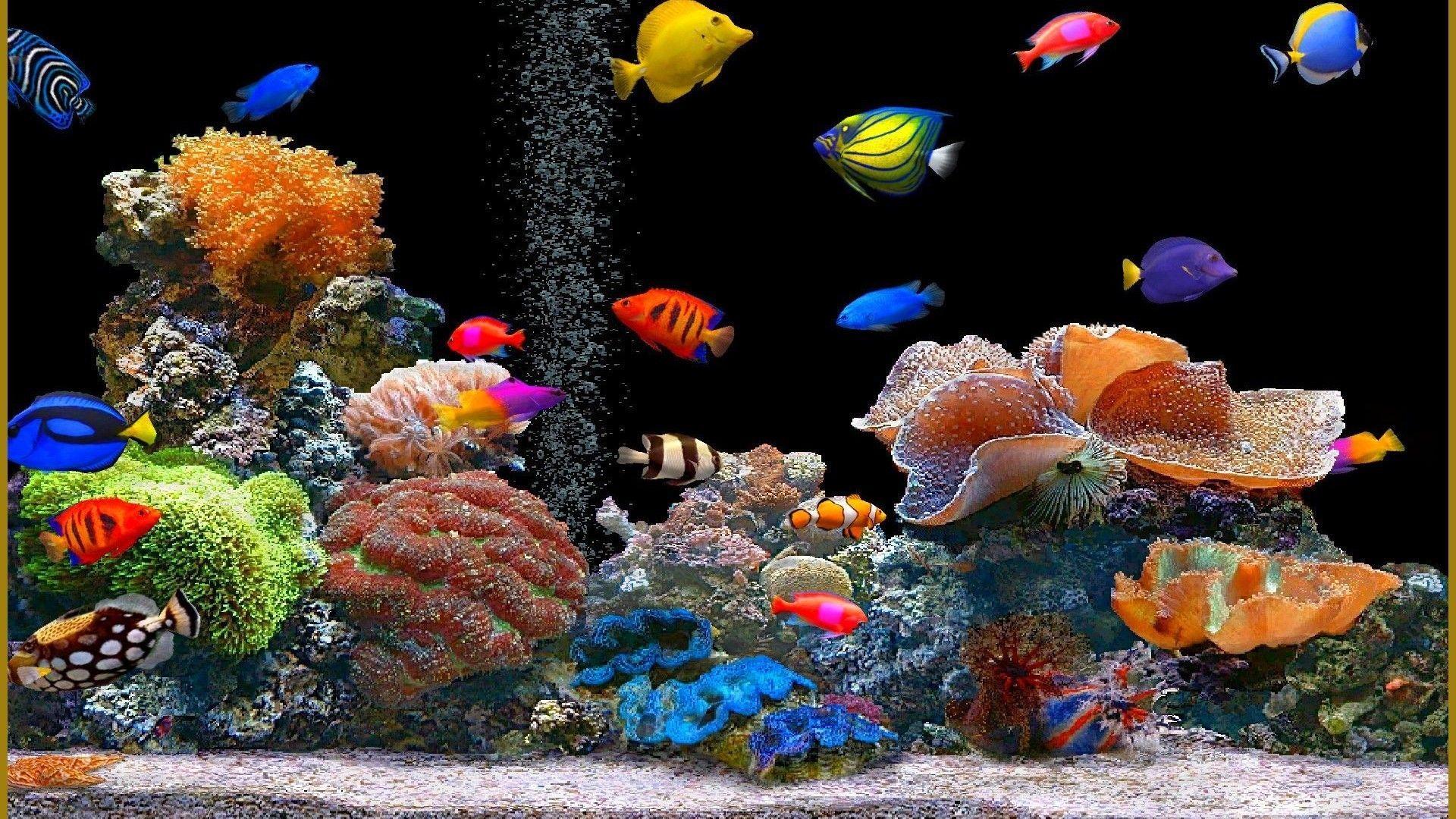 Cartoon Aquarium Wallpapers   Top Free Cartoon Aquarium ...
