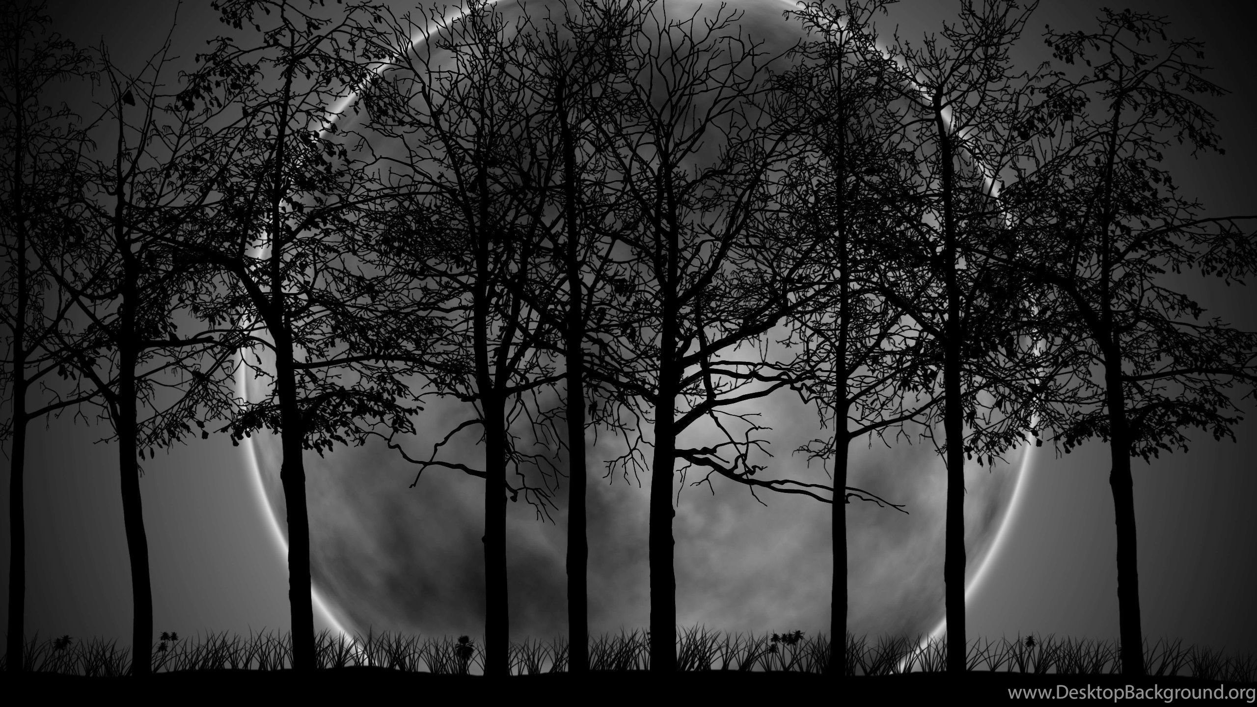 Dark Tree Wallpapers Top Free Dark Tree Backgrounds