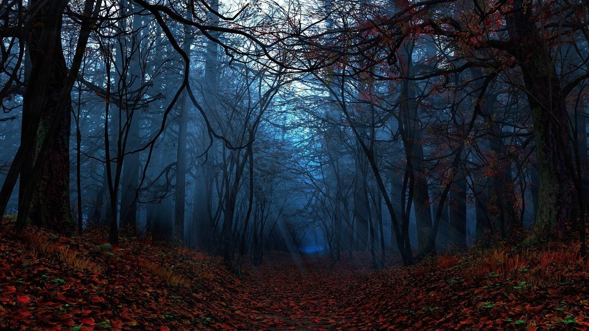 Fall Forest Night Wallpapers Top Free Fall Forest Night Backgrounds Wallpaperaccess