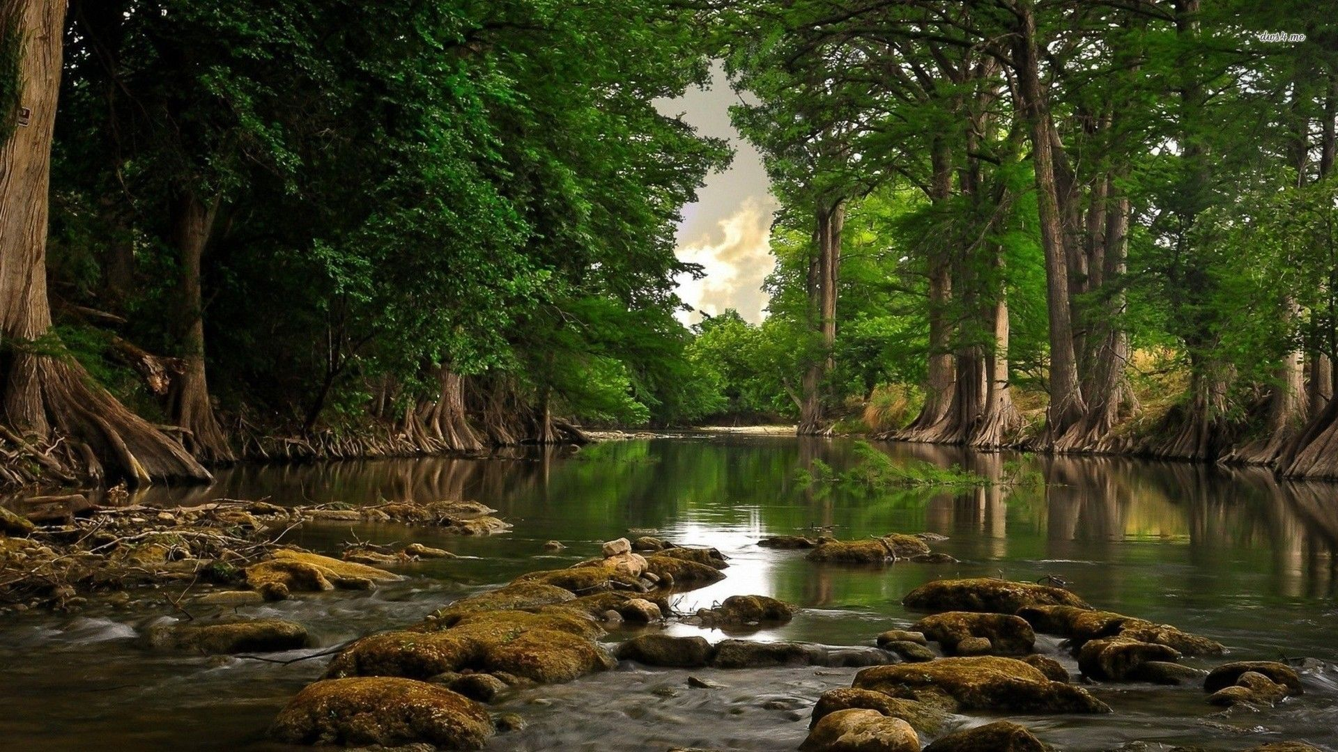 Forest River Wallpapers Top Free Forest River Backgrounds Wallpaperaccess