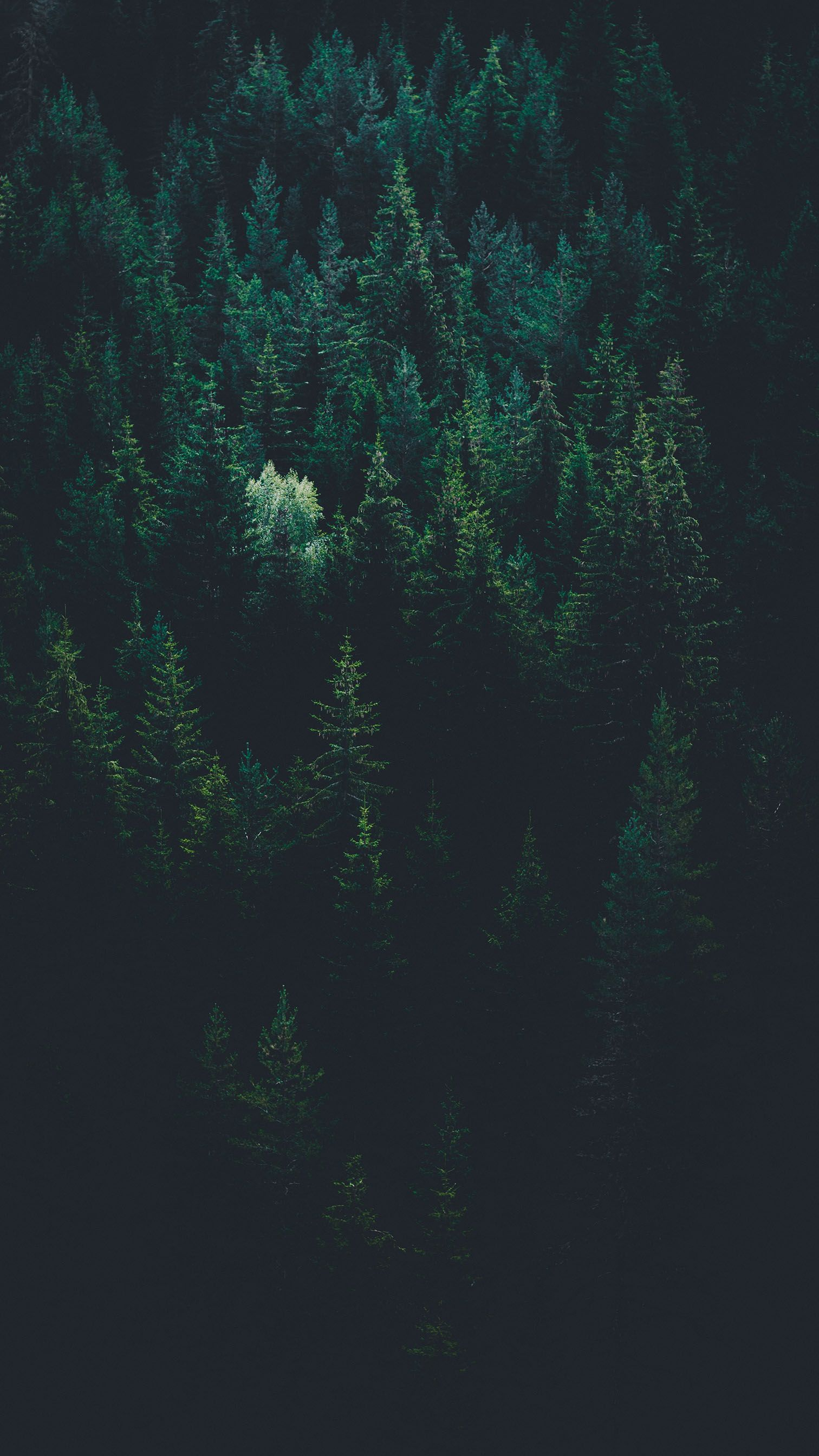 Night Forest Iphone Wallpapers Top Free Night Forest Iphone