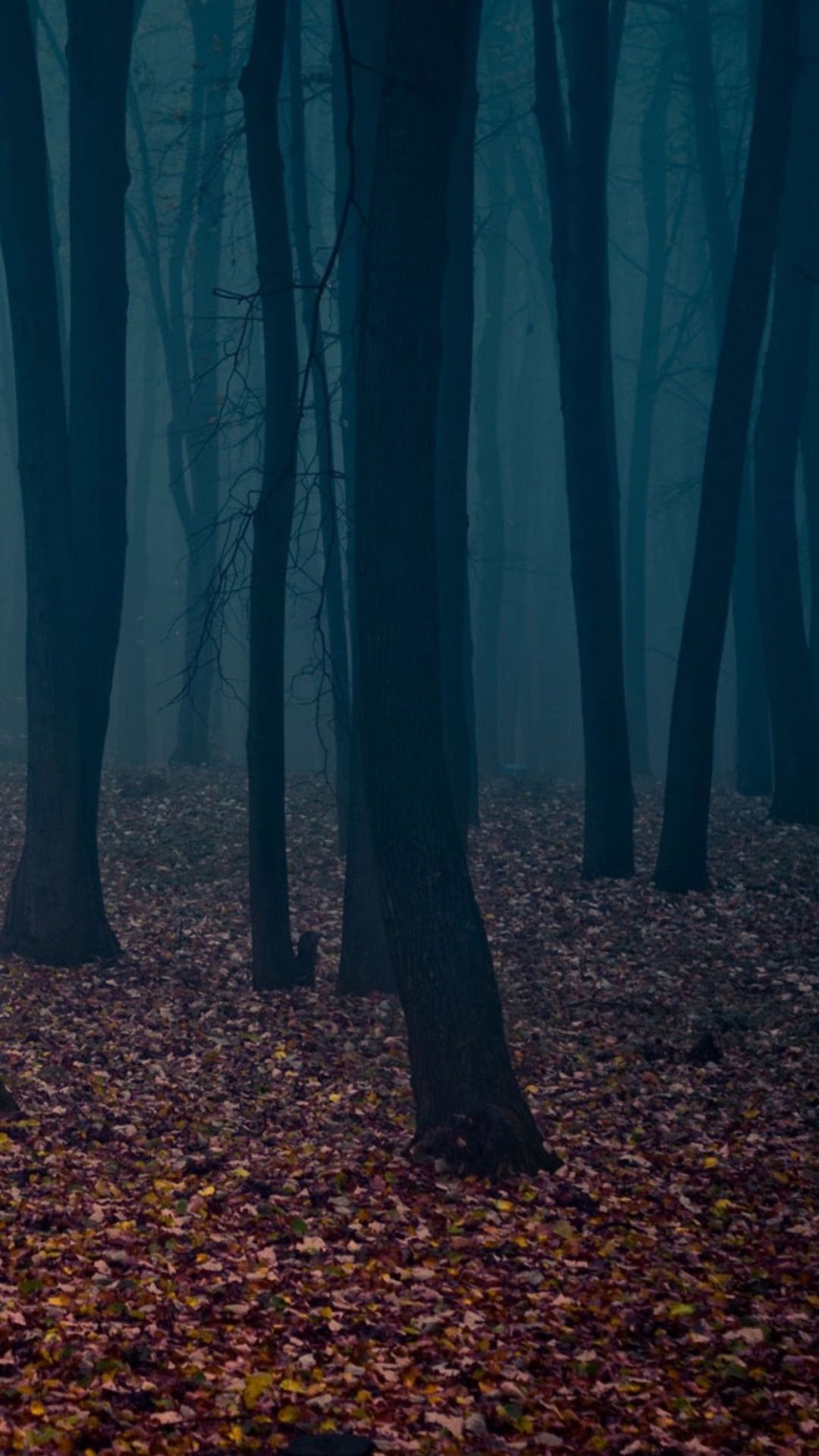 Fall Forest Night Wallpapers Top Free Fall Forest Night