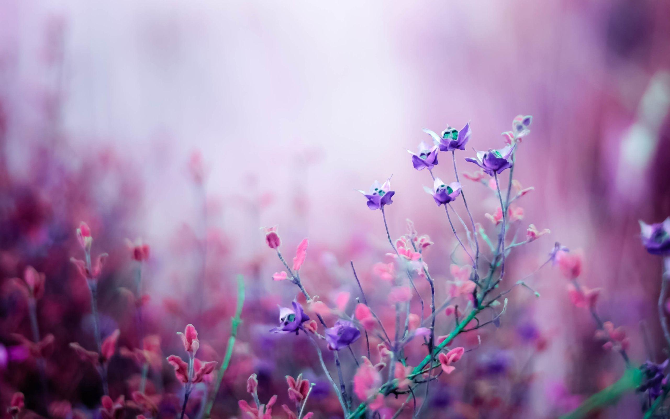 Purple Flower Wallpapers - Top Free ...