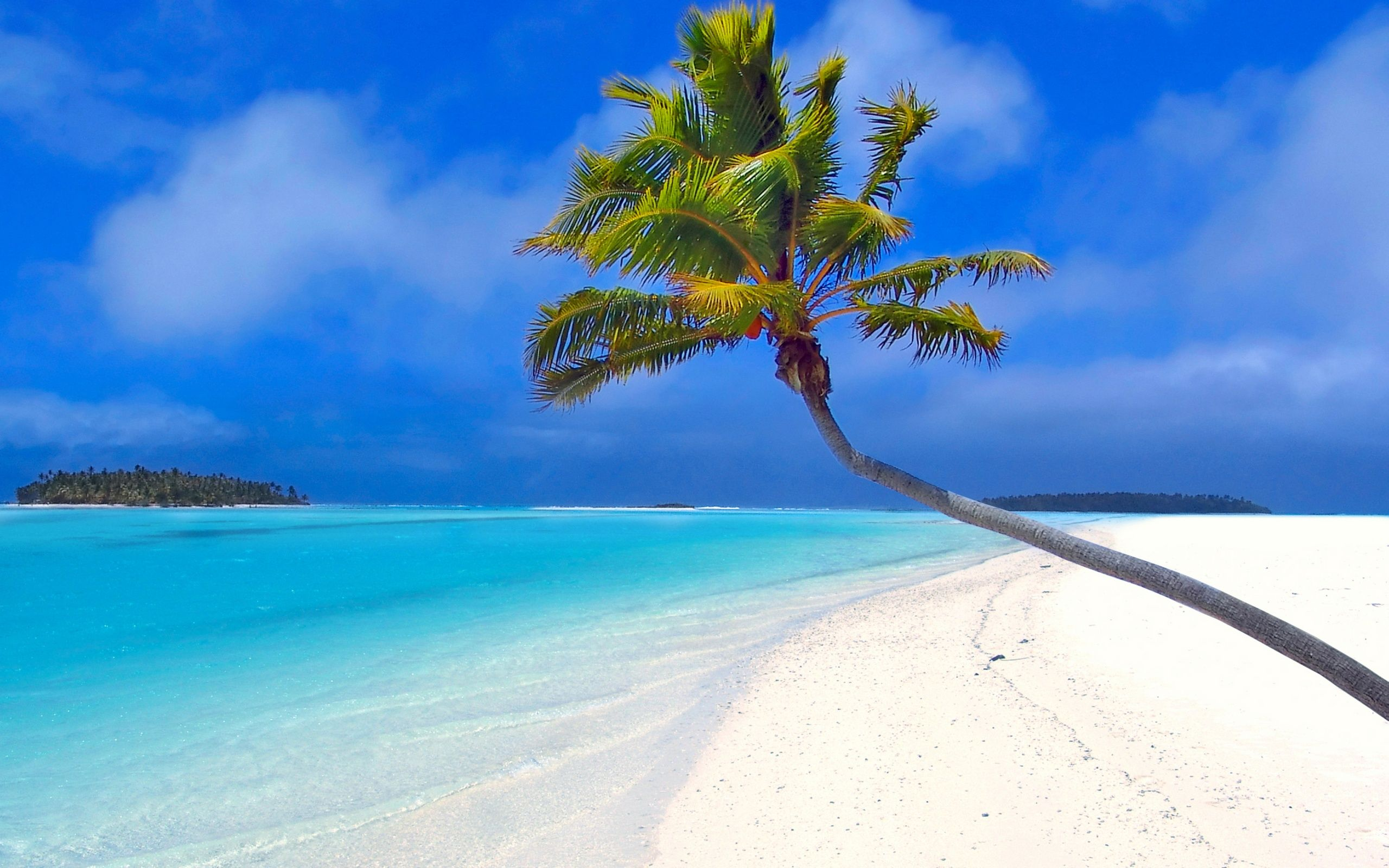 Palm Beach Wallpapers Top Free Palm Beach Backgrounds