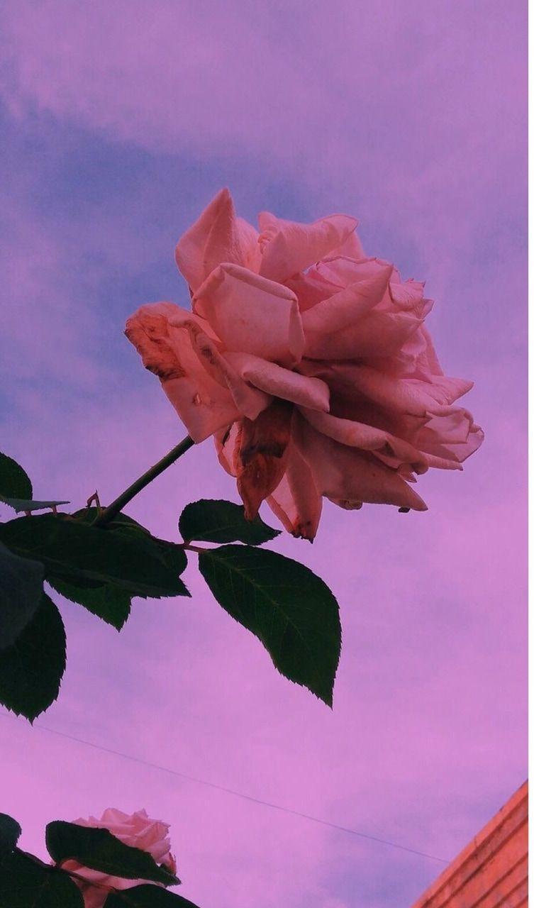 753x1280 VSCO hoa màu tím đã chia sẻ