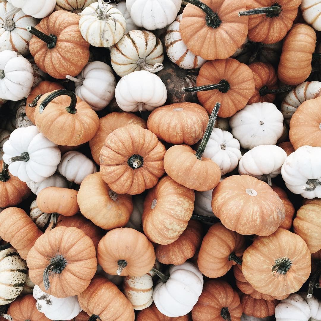 Aesthetic Pumpkin Wallpapers - Top Free Aesthetic Pumpkin ...
