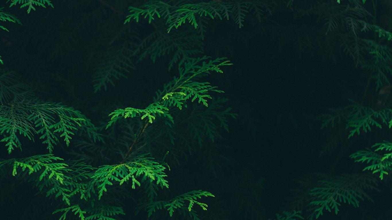 green aesthetic desktop wallpapers
