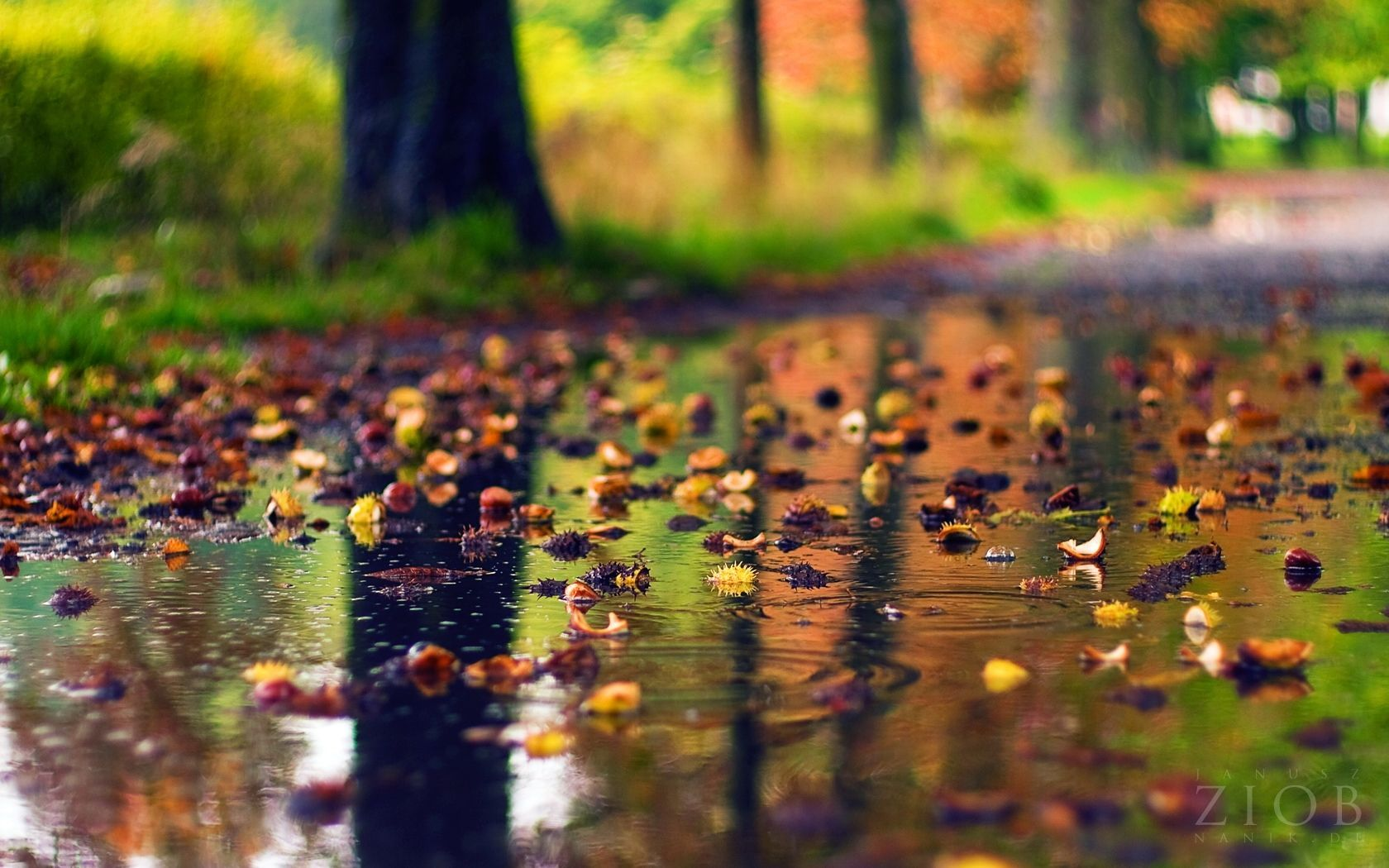 Autumn Rain Wallpapers Top Free Autumn Rain Backgrounds Wallpaperaccess