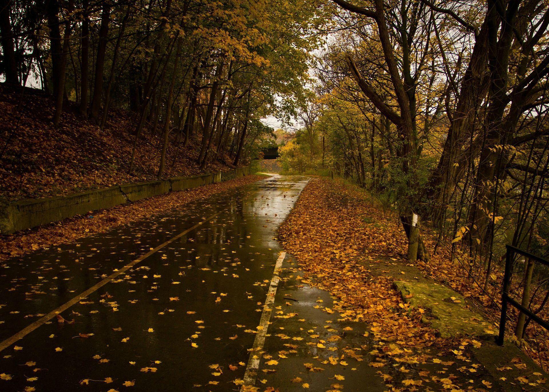 Rainy Fall Wallpapers Top Free Rainy Fall Backgrounds