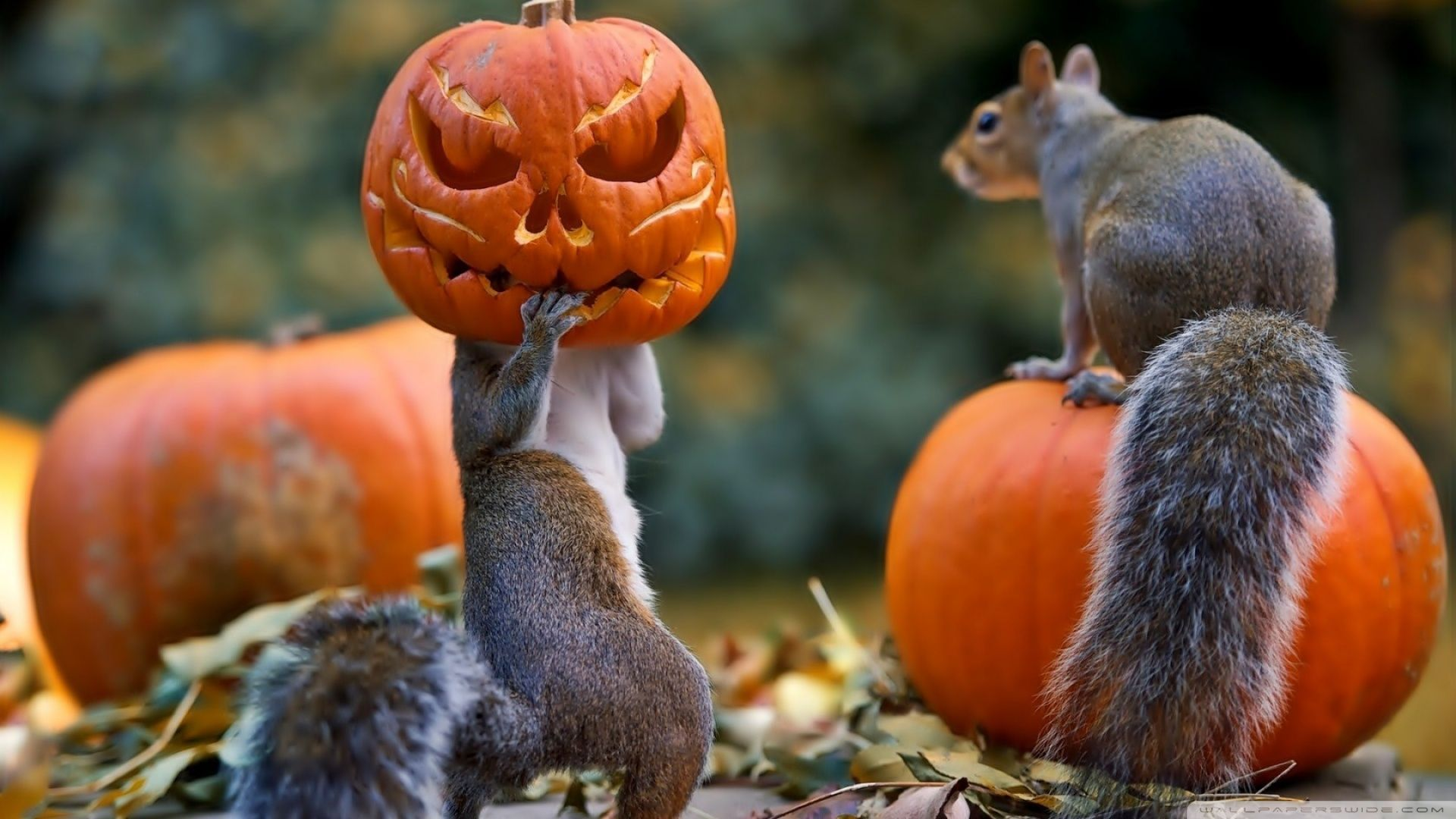 Funny Halloween Animals Wallpapers Top Free Funny Halloween Animals Backgrounds Wallpaperaccess