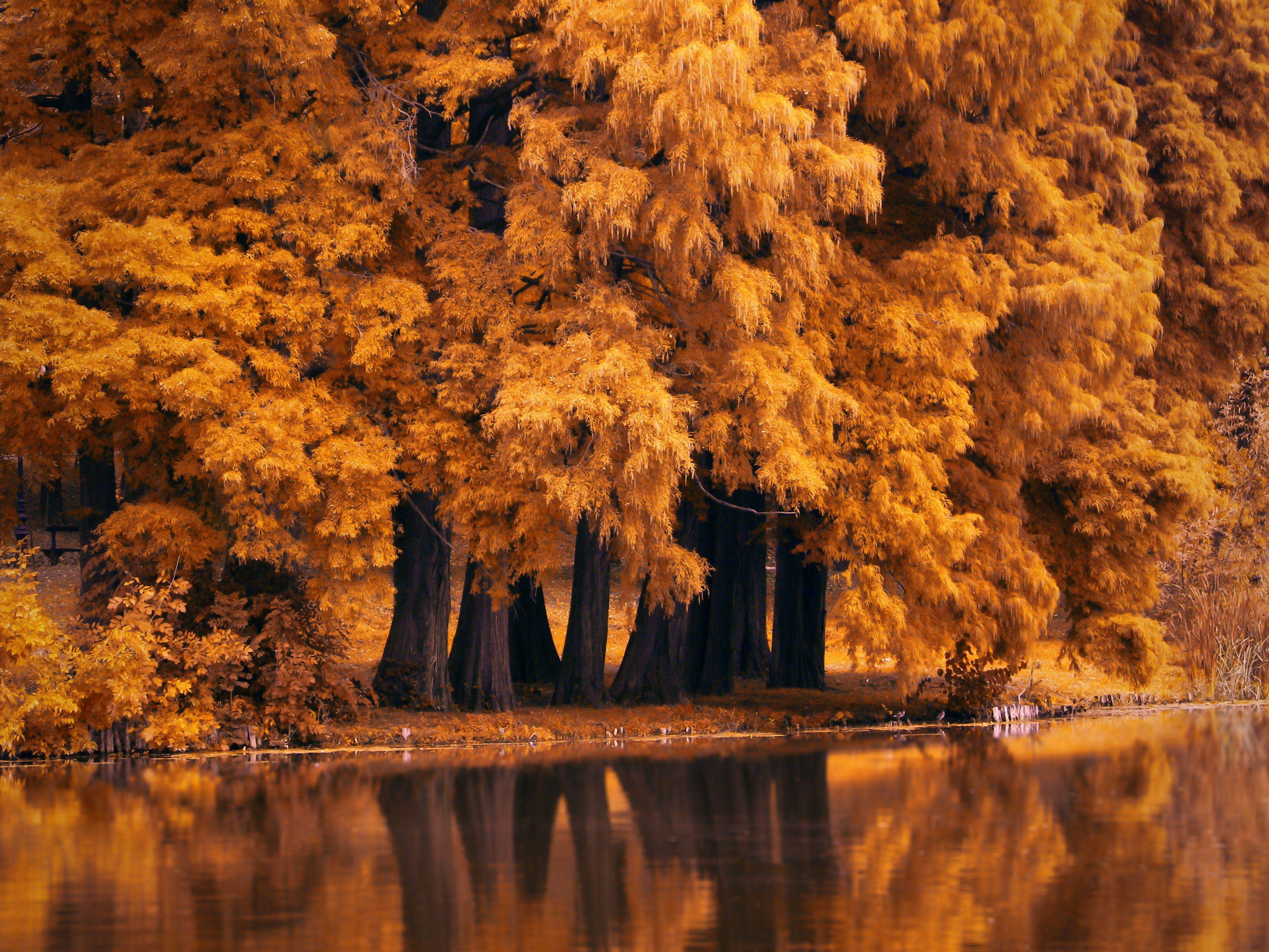 Autumn 4k Wallpapers Top Free Autumn 4k Backgrounds Wallpaperaccess