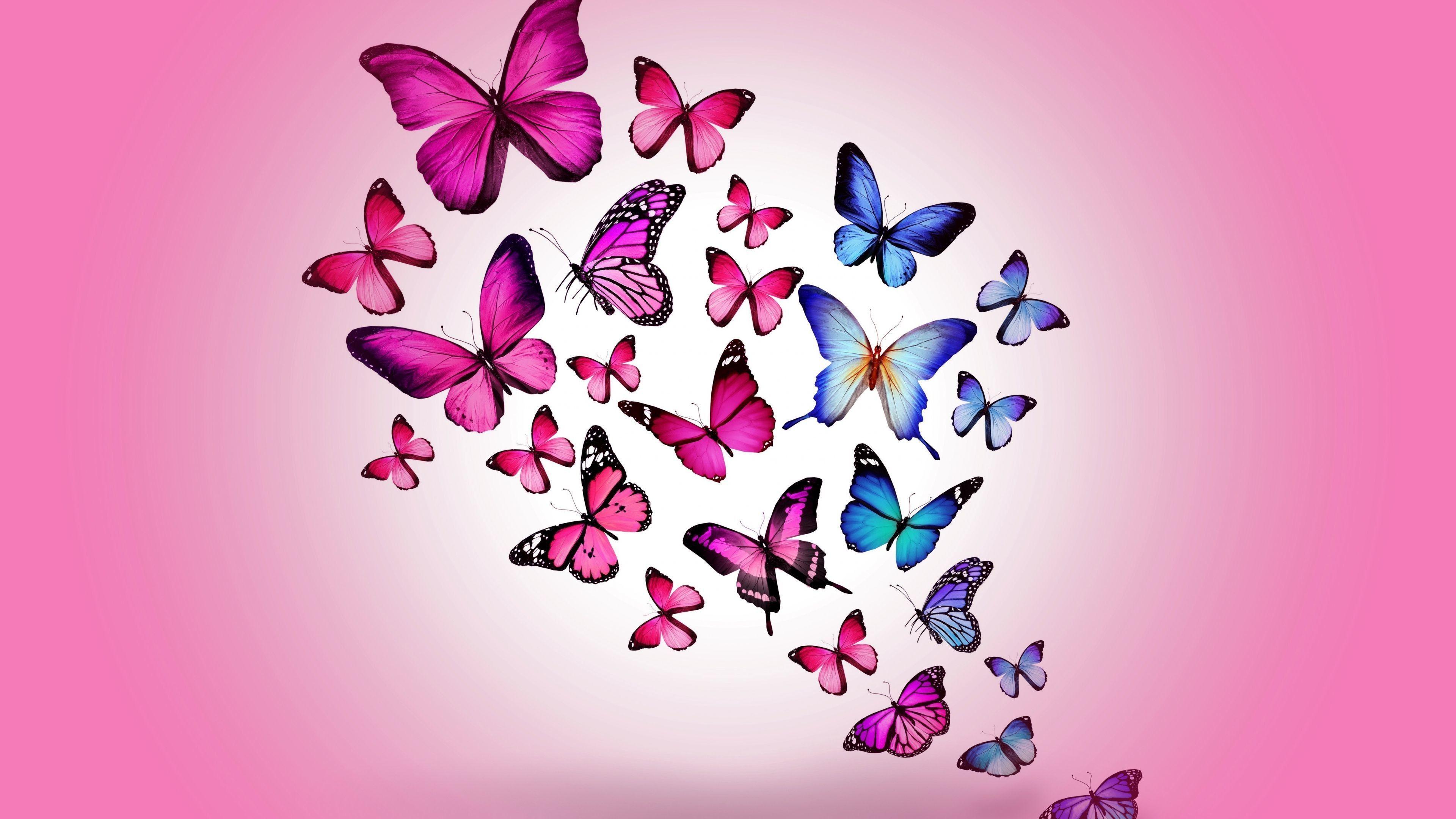 Pink Butterflies Wallpapers Top Free Pink Butterflies Backgrounds Wallpaperaccess pink butterflies wallpapers top free