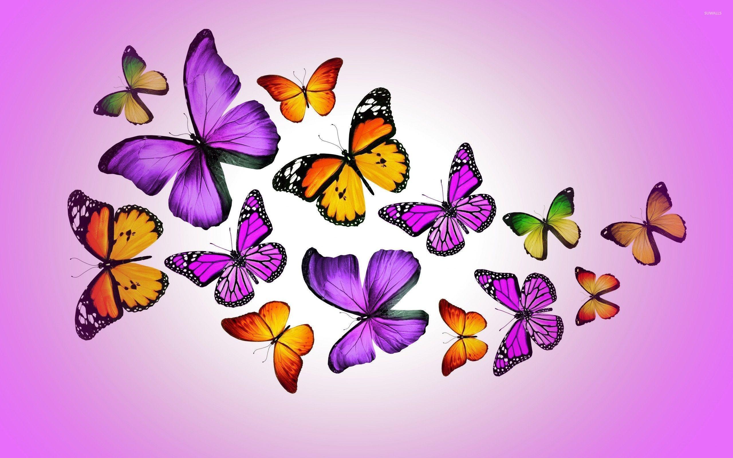 Cartoon Butterfly Wallpapers - Top Free Cartoon Butterfly ...
