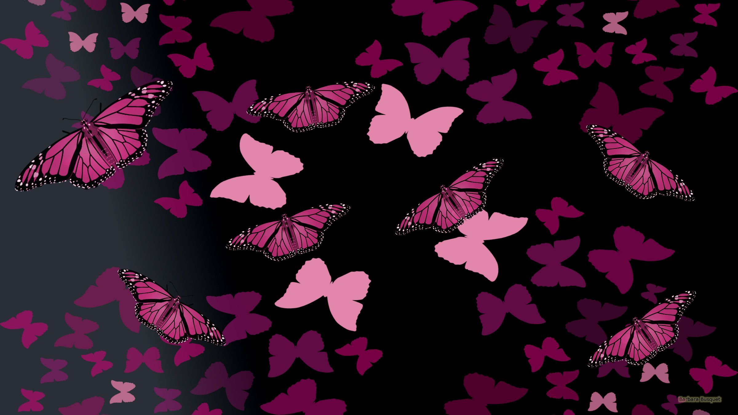 Black And Pink Butterfly Wallpapers Top Free Black And Pink Butterfly Backgrounds Wallpaperaccess