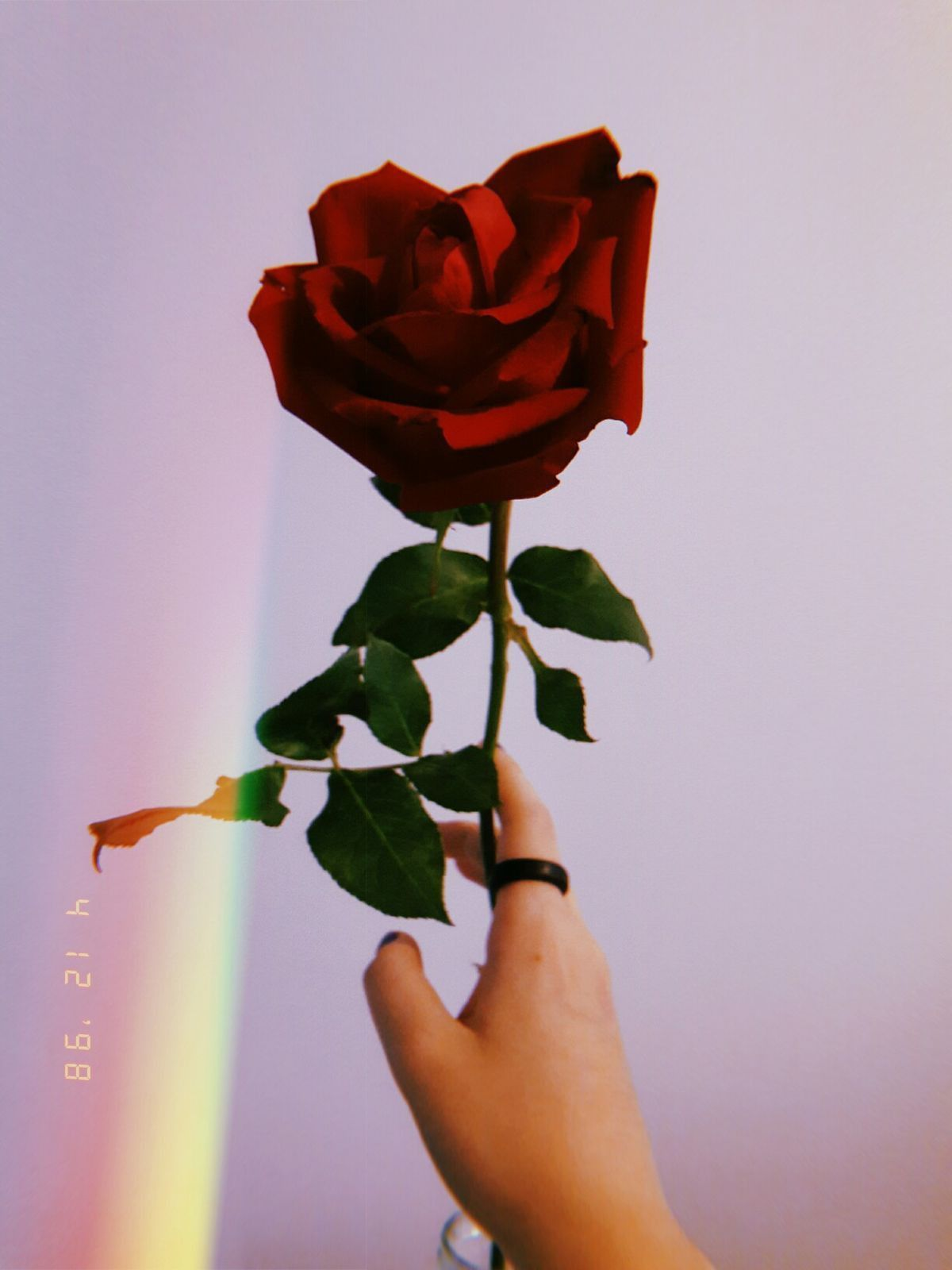 Sad Rose Aesthetic Wallpapers Top Free Sad Rose Aesthetic Backgrounds Wallpaperaccess That offers lots of beauty services whether it be skin care, body care, hair. sad rose aesthetic wallpapers top