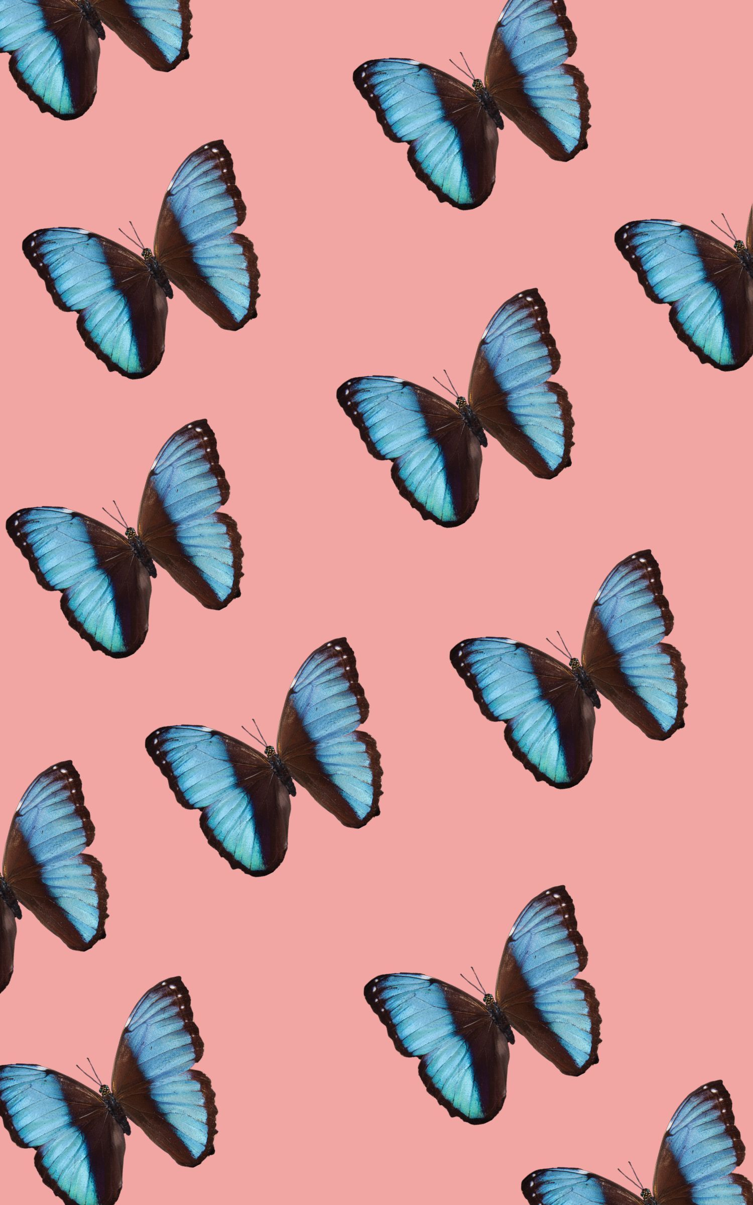 Aesthetic Butterfly Wallpapers , Top Free Aesthetic