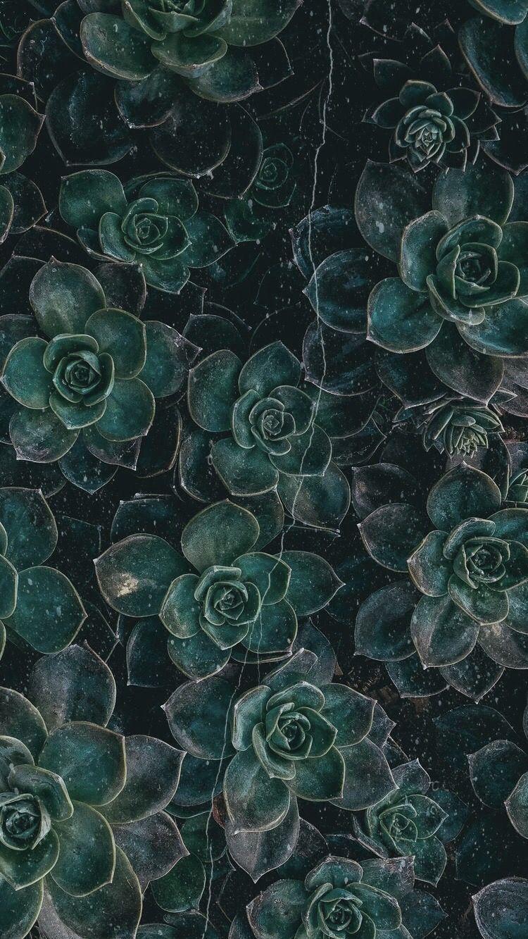 Dark Green Aesthetic Wallpapers - Top Free Dark Green ...