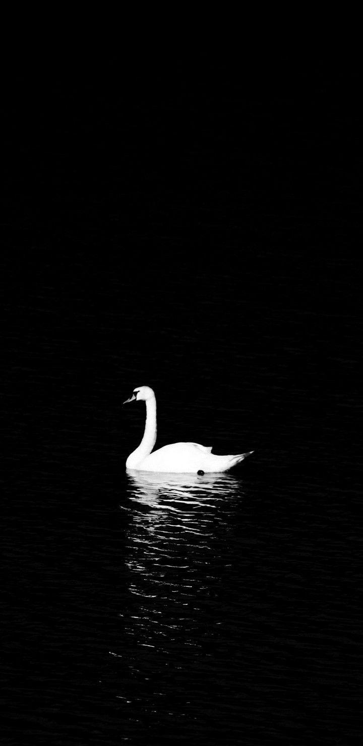 Black Swan Bts Wallpapers Top Free Black Swan Bts Backgrounds