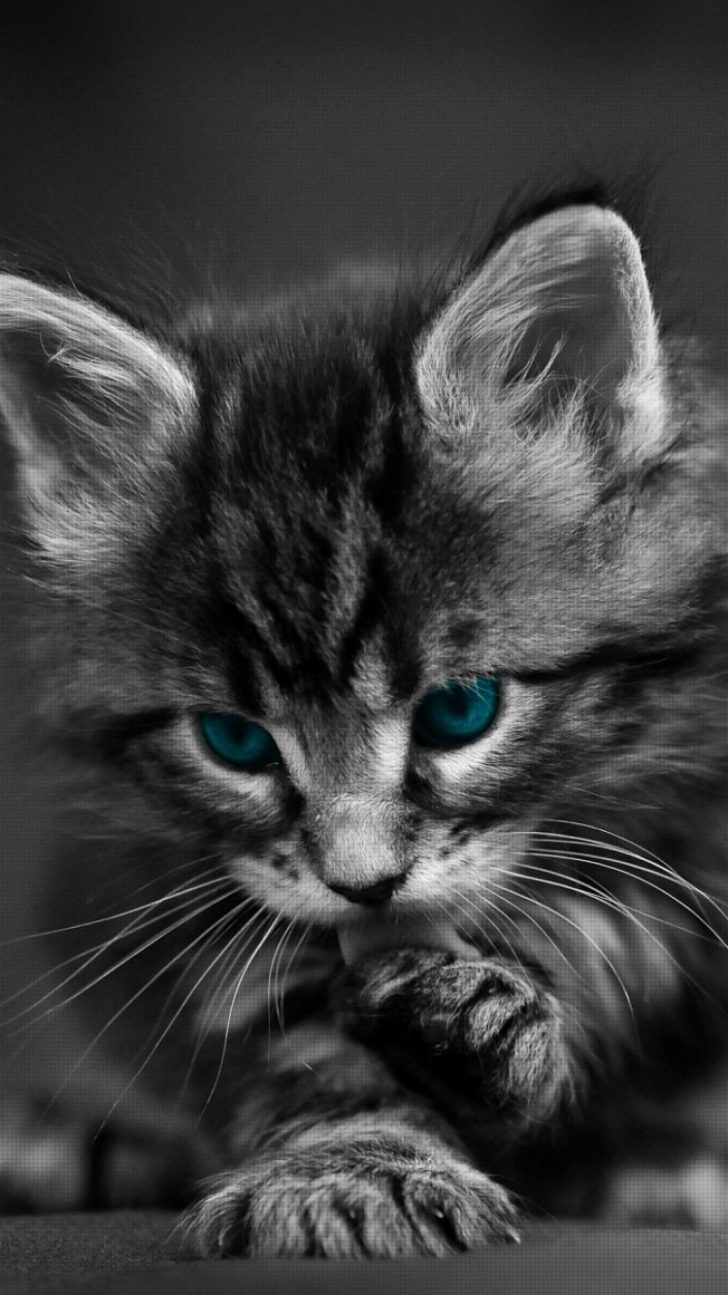 Cat Iphone Wallpapers Top Free Cat Iphone Backgrounds