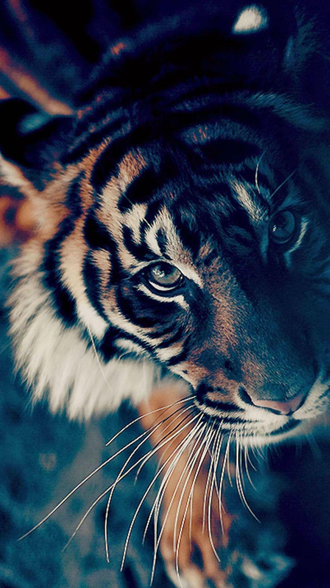 Kawaii Anime Tiger Wallpapers Top Free Kawaii Anime Tiger