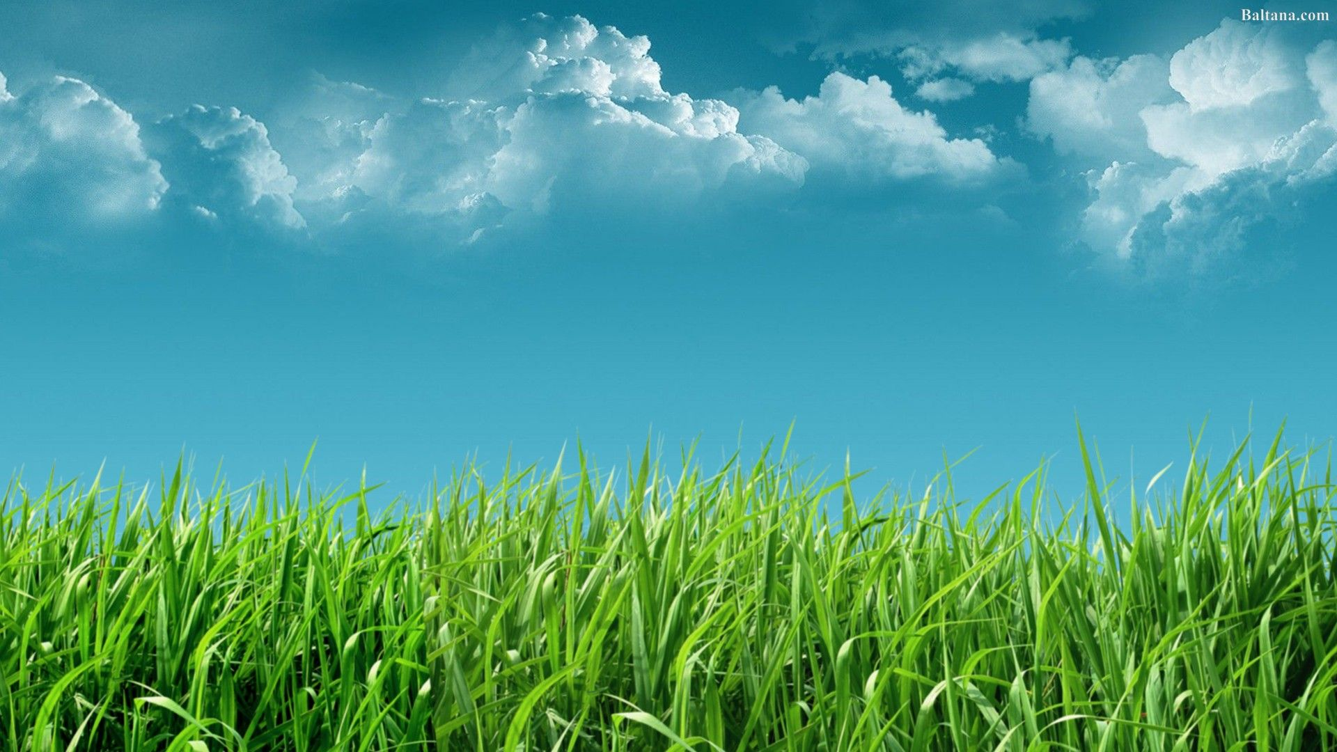 Grass Wallpapers Top Free Grass Backgrounds Wallpaperaccess
