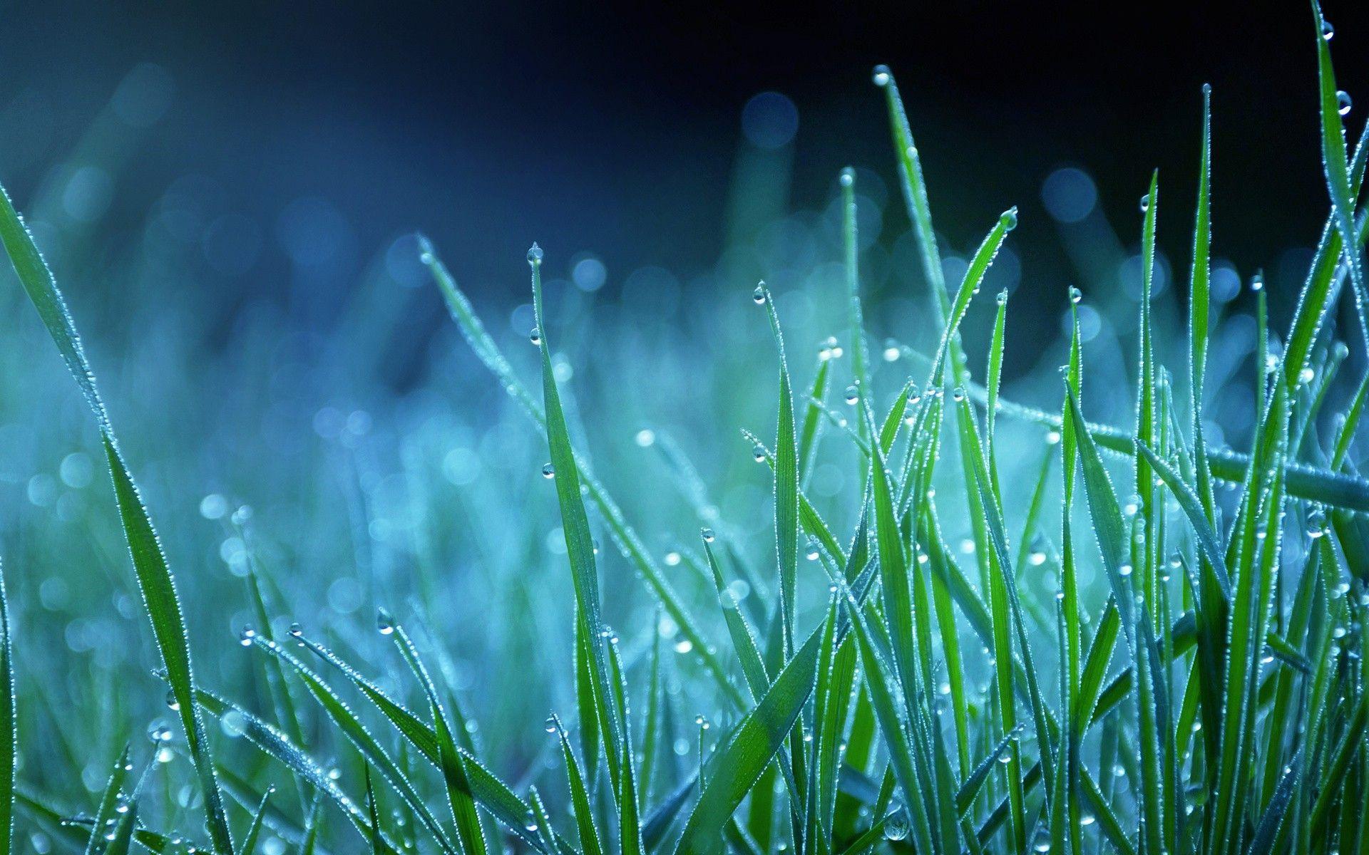 Grass Wallpapers Top Free Grass Backgrounds Wallpaperaccess