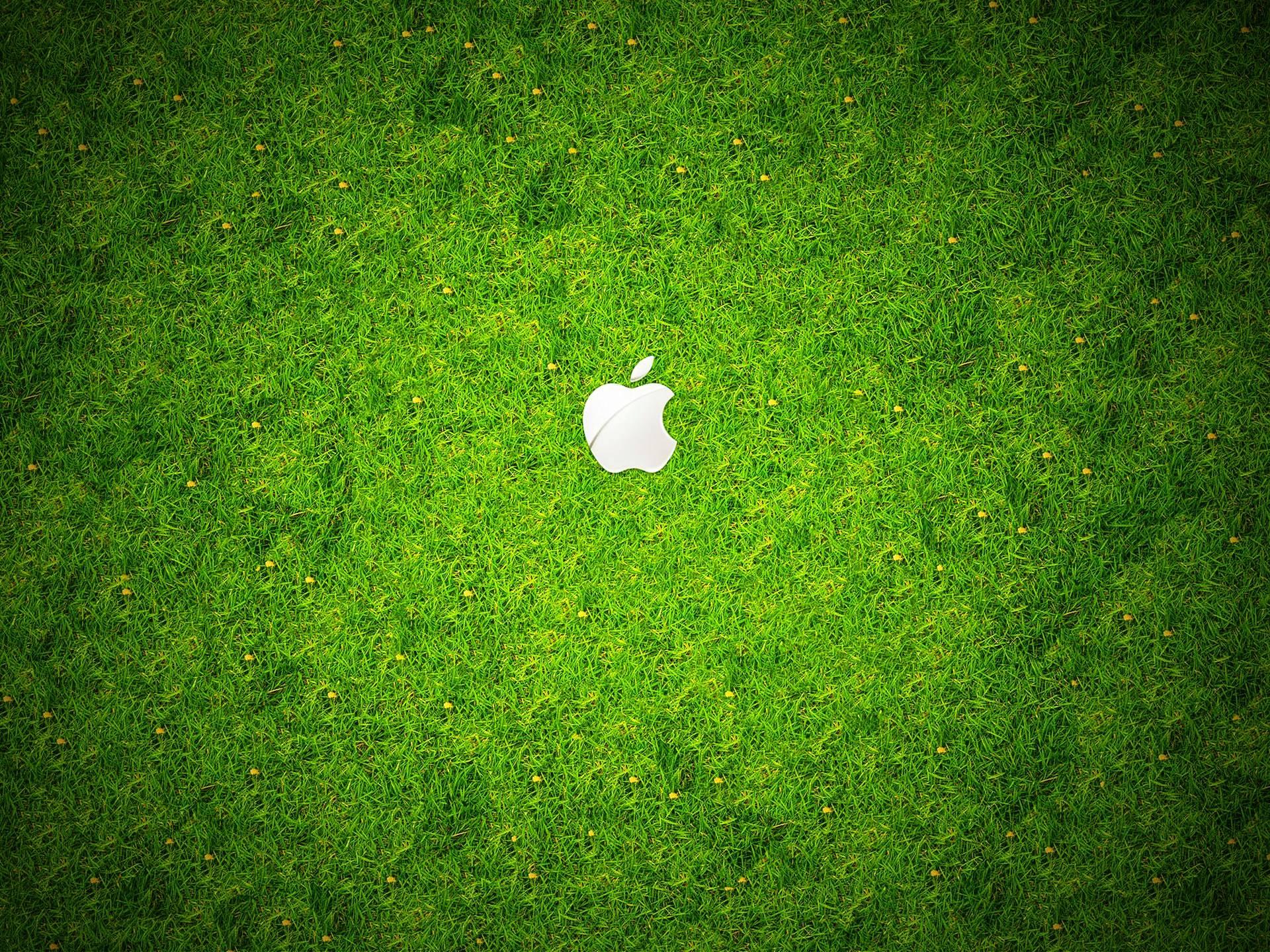 green grass wallpapers top free green grass backgrounds wallpaperaccess green grass wallpapers top free green
