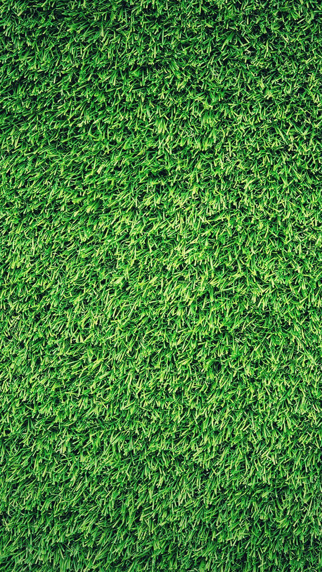 Grass Iphone Wallpapers Top Free Grass Iphone Backgrounds Wallpaperaccess