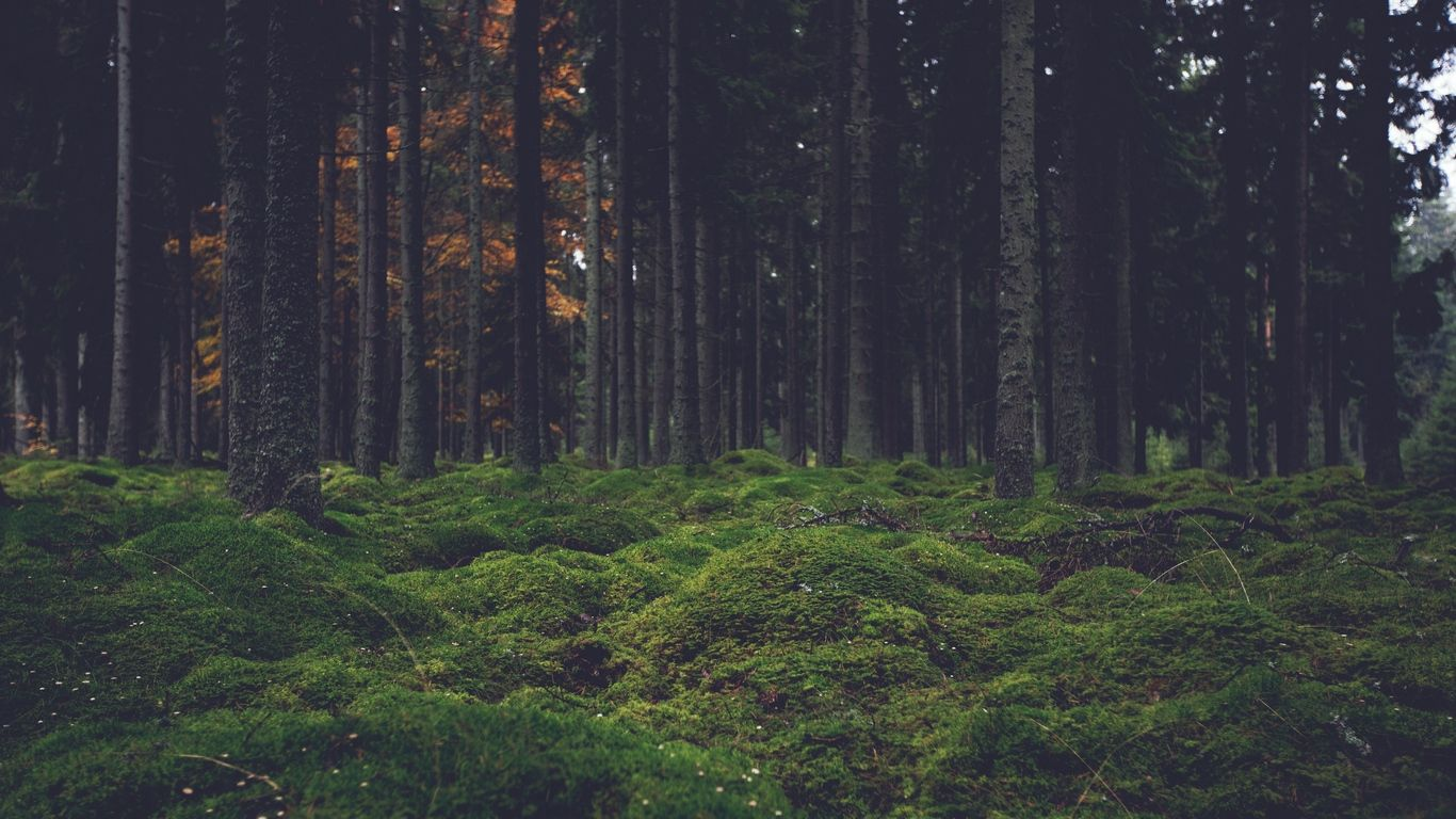 Forest Laptop Wallpapers Top Free Forest Laptop Backgrounds Wallpaperaccess