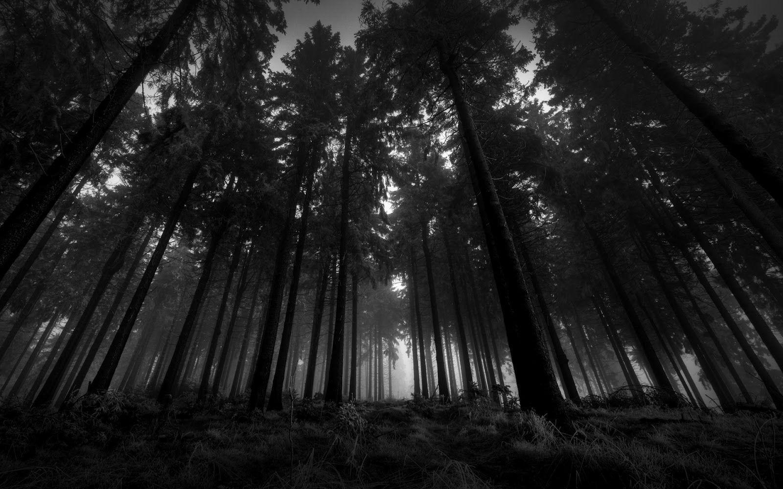 Black Forest Wallpapers Top Free Black Forest Backgrounds