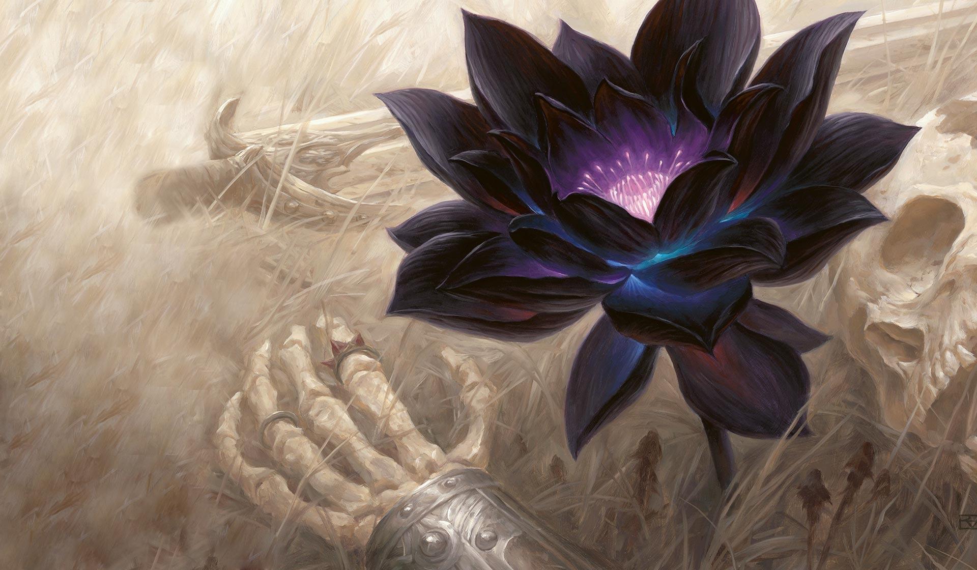 Black Lotus Wallpapers Top Free Black Lotus Backgrounds Wallpaperaccess